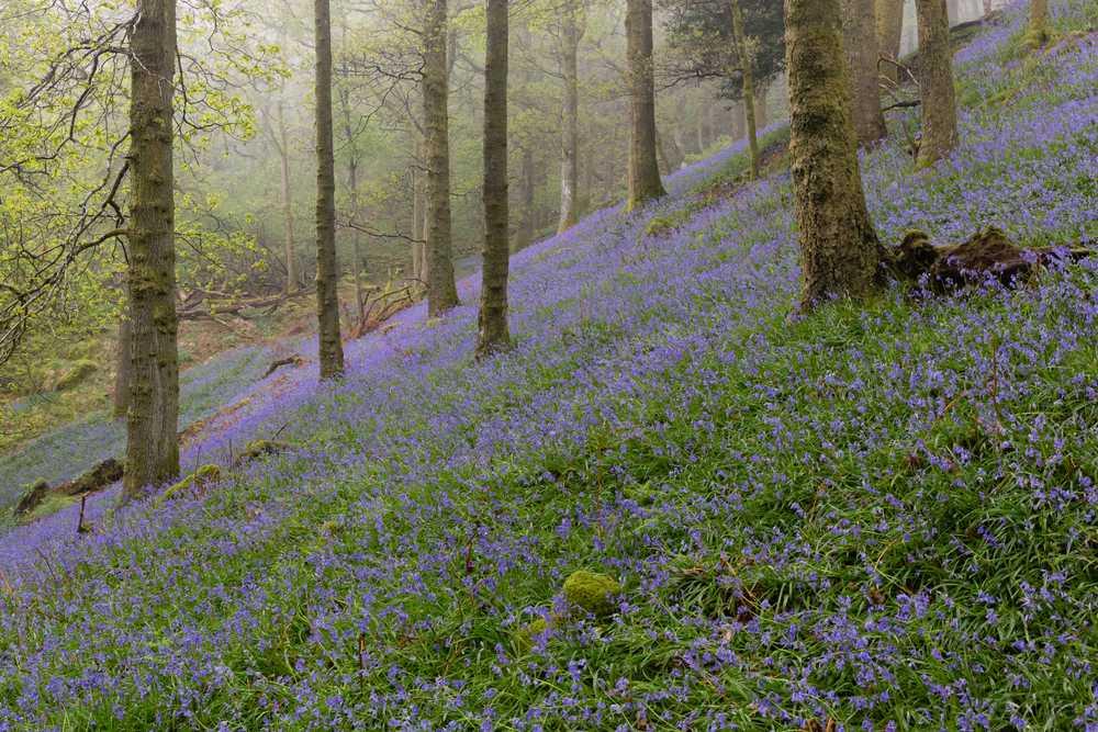 Spring Break in the Lake District
